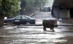 Тбилисцев попросили не покидать дома из-за сбежавших из зоопарка хищников