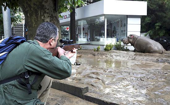 Большинство хищников из зоопарка Тбилиси пойманы или застрелены