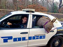 Полицейский в Оклахоме спас ослика, посадив его в полицейскую машину